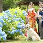 中島 わんちゃんと一緒に紫陽花ショット